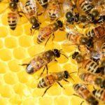 Produkty pszczele na wagę dobrej kondycji